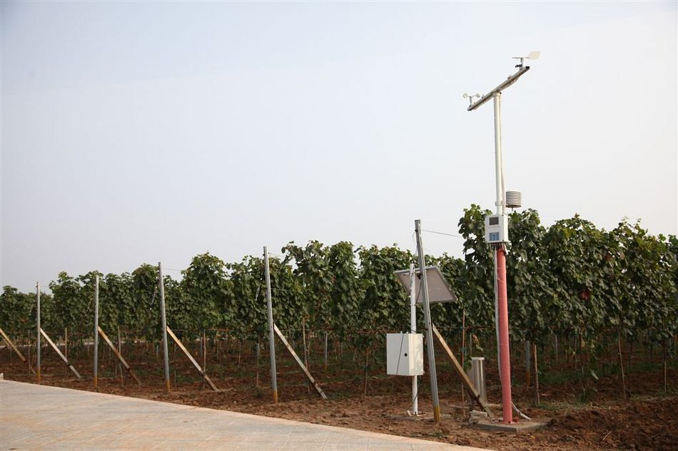 Chinese winemaker optimizes production with modern MES-System